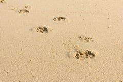 Empreintes de pas de chien à l'arrière-plan de sable Images libres de droits