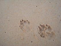 Empreintes de pas de chien Photos libres de droits