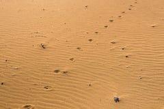 Empreintes de pas de chien dans le sable Image stock