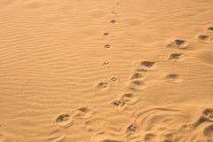 Empreintes de pas de chien dans le sable Photographie stock libre de droits