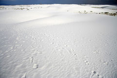 Empreintes de pas de désert Photographie stock