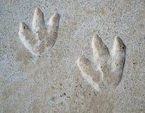 Empreintes de pas de dinosaur Photos stock