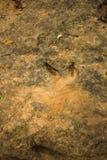 Empreintes de pas de dinosaure Photos stock