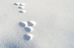 Empreintes de pas de lapin dans la neige photos stock