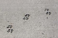 Empreintes de pas de patte Photo libre de droits
