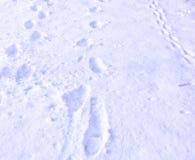 Empreintes de pas des chaussures sur neigeux Images stock