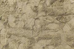 Empreintes de pas des espadrilles dans le sable Image libre de droits