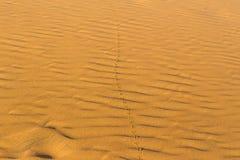 Empreintes de pas du ` s d'oiseau sur le sable onduleux dans le désert Images libres de droits