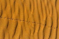 Empreintes de pas du ` s d'oiseau sur le sable onduleux dans le désert Photo libre de droits