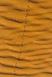 Empreintes de pas du ` s d'oiseau sur le sable onduleux dans le désert photos stock