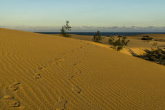 Empreintes de pas en dunes de sable Photos stock