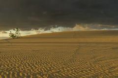 Empreintes de pas en dunes de sable Image libre de droits