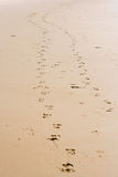 Empreintes de pas en sable Photographie stock libre de droits