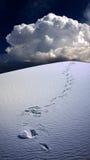 Empreintes de pas en sables de désert Image stock