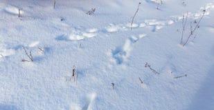 Empreintes de pas de la bête sur la neige en hiver image stock