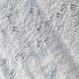 Empreintes de pas de mouette à travers la plage sablonneuse photos stock