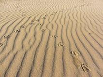 Empreintes de pas de mouette sur à sable jaune d'une plage italienne Image stock