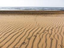Empreintes de pas de mouette sur à sable jaune d'une plage italienne Image libre de droits