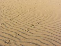 Empreintes de pas de mouette sur à sable jaune d'une plage italienne Photo libre de droits