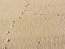 Empreintes de pas de mouette sur à sable jaune d'une plage italienne Images libres de droits