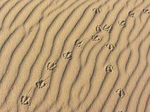 Empreintes de pas de mouette sur à sable jaune d'une plage italienne Photographie stock