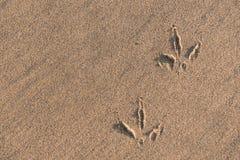 Empreintes de pas de mouette sur le sable Photos stock