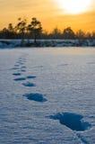 Empreintes de pas sur la neige. Photographie stock