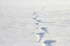 Empreintes de pas sur la neige Images libres de droits