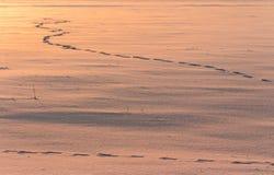 Empreintes de pas sur la neige Neige et horizontal de l'hiver Image stock