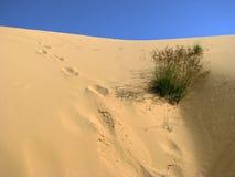 Empreintes de pas sur le sable en dune du Vietnam Photos stock