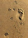 Empreintes de pas sur une plage photographie stock libre de droits