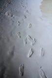 Empreintes de pas sur une plage Image stock