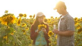 Empresaria y hombre de negocios en plan del campo su renta cosecha de los estudios del agrónomo de un girasol el hombre del granj almacen de metraje de vídeo