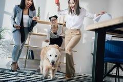 Empresarias jovenes que juegan con el perro del golden retriever en oficina moderna Fotografía de archivo libre de regalías