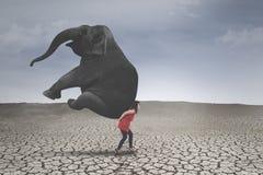 Empresario de sexo femenino con el elefante en suelo seco fotos de archivo