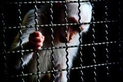 Emprisonnez Photos libres de droits