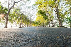 Empthy running lanes of road in park. Between tree at sunset timing location at Bangkok Thailand royalty free stock photography