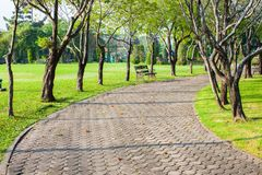 Empthy running lanes of road in park. Between tree at sunset timing location at Bangkok Thailand royalty free stock images