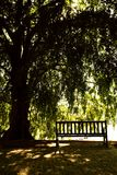 Emptiness. Romantic place with tree and chair for resting in Brisbane park, australia Stock Photography