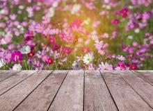 Emptwooden阳台与五颜六色的波斯菊的大阳台地板开花开花在领域 免版税图库摄影