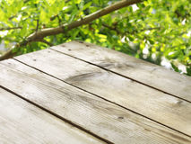 Table under the tree Royalty Free Stock Photo