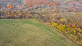 Empty agricultural fields near autumn forest. Bird`s eye view of geometric forms of empty agricultural fields near autumn forest royalty free stock photo