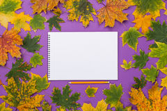 Empty album in the frame of colorful autumn leaves Royalty Free Stock Photos