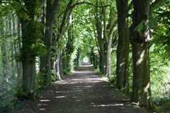 Empty alley. In the spring forest Royalty Free Stock Photography