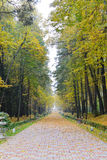 Empty alley in autumn park. Empty foggy autumn alley in the early morning Royalty Free Stock Photo