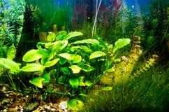 Empty aquarium Stock Photography