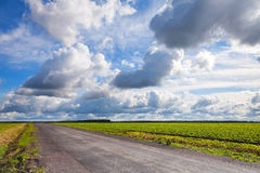 Empty asphalt country road with cloudy sky Stock Image