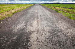 Empty asphalt country road perspective Stock Photography