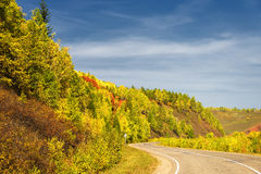 Empty asphalt mountain road with near the forest with day light. Royalty Free Stock Image
