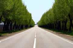 Empty asphalt road at countryside, trees on both road sides Royalty Free Stock Image